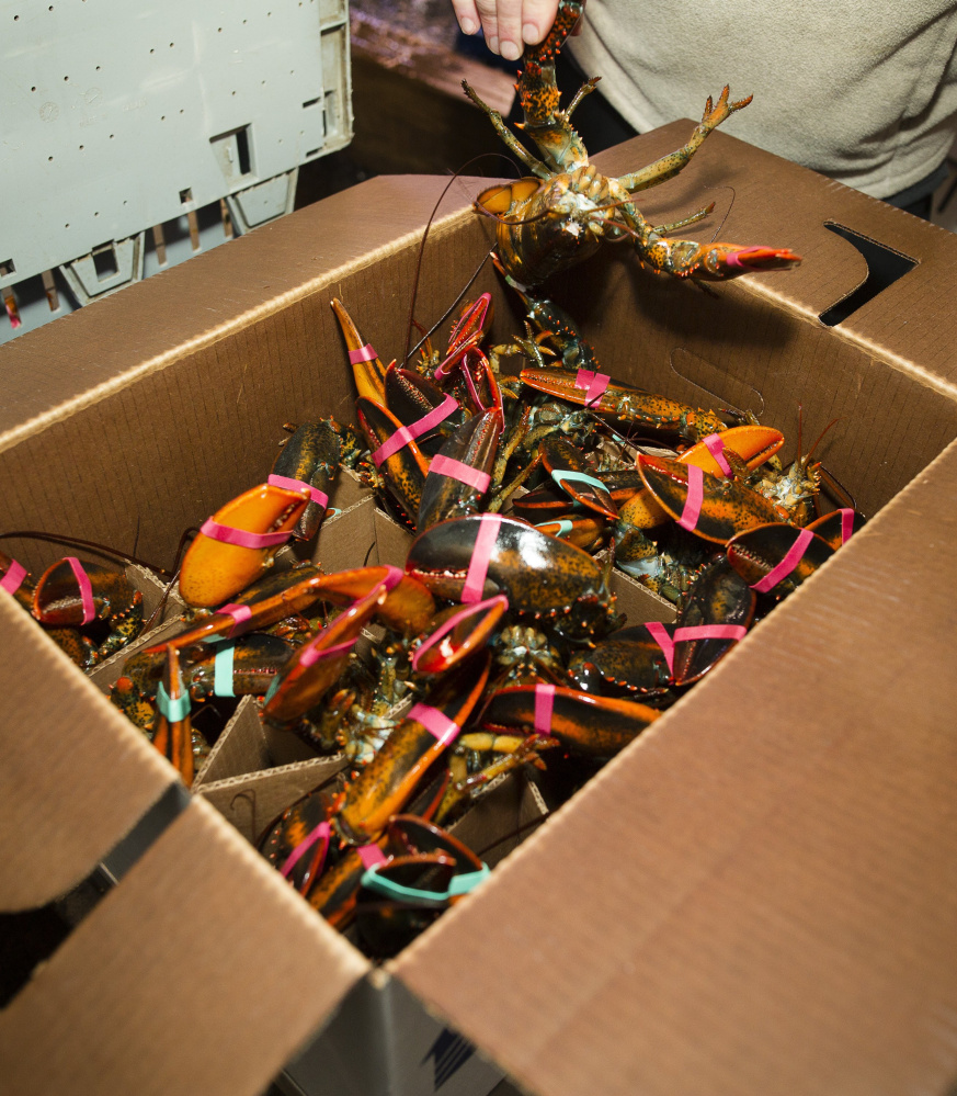 The European Union accounts for one-fifth of all American lobster exports.
