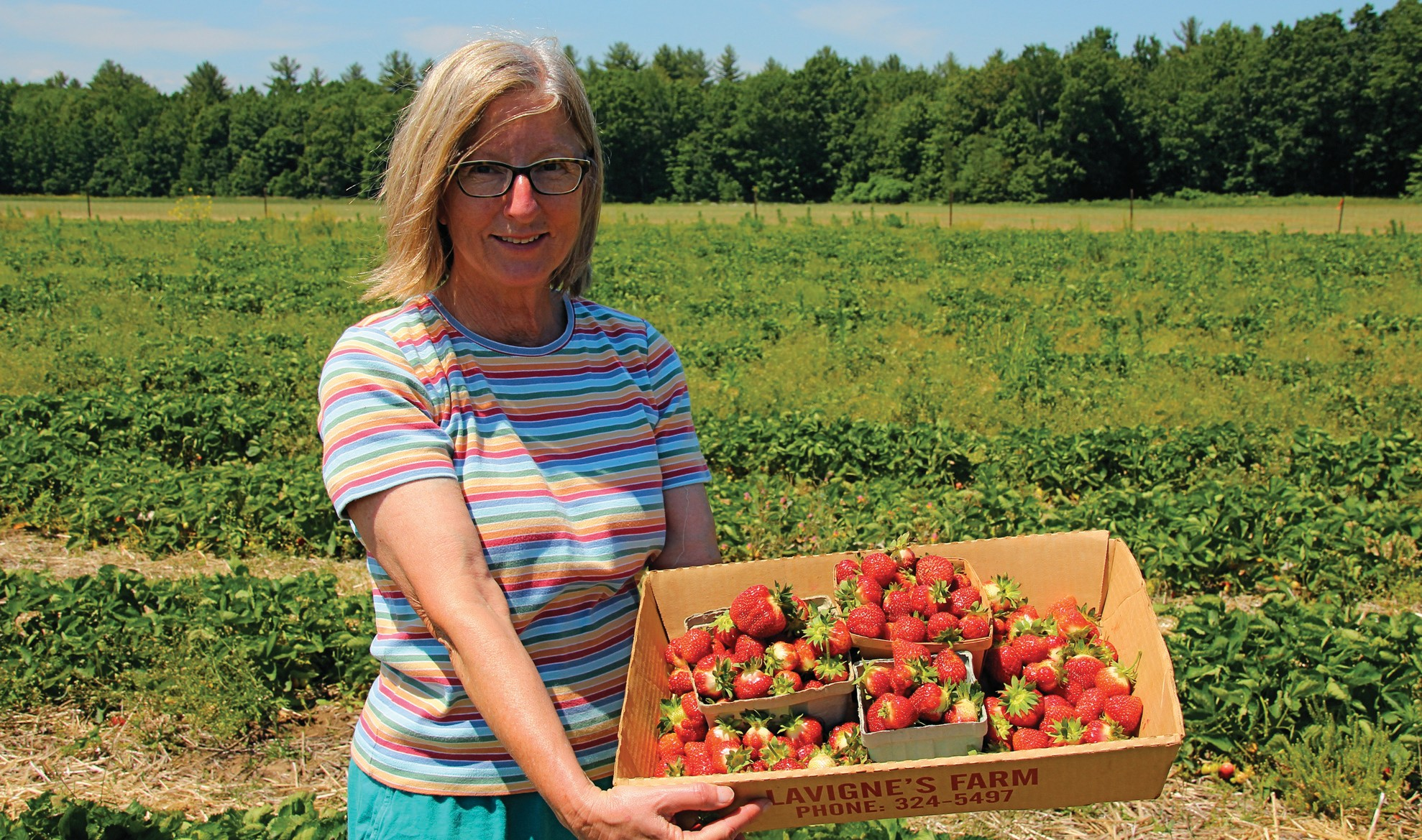 Take Your Pick Strawberries For Shortcake Jam Or As They Are Portland Press Herald