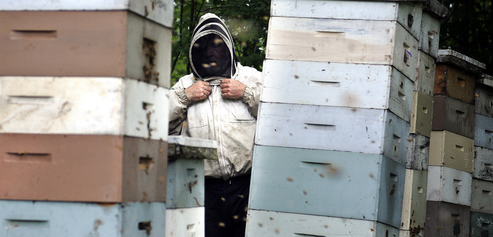 Maine beekeepers face challenges but their numbers grow