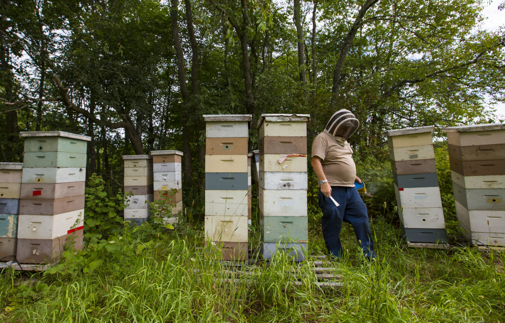 Tony Bachelder of Tony's Honey & Pollination Service tends to his hives. Beginning Jan. 1, beekeepers will have to hire a vet to administer antibiotics to sick bees. Ben McCanna/Staff Photographer