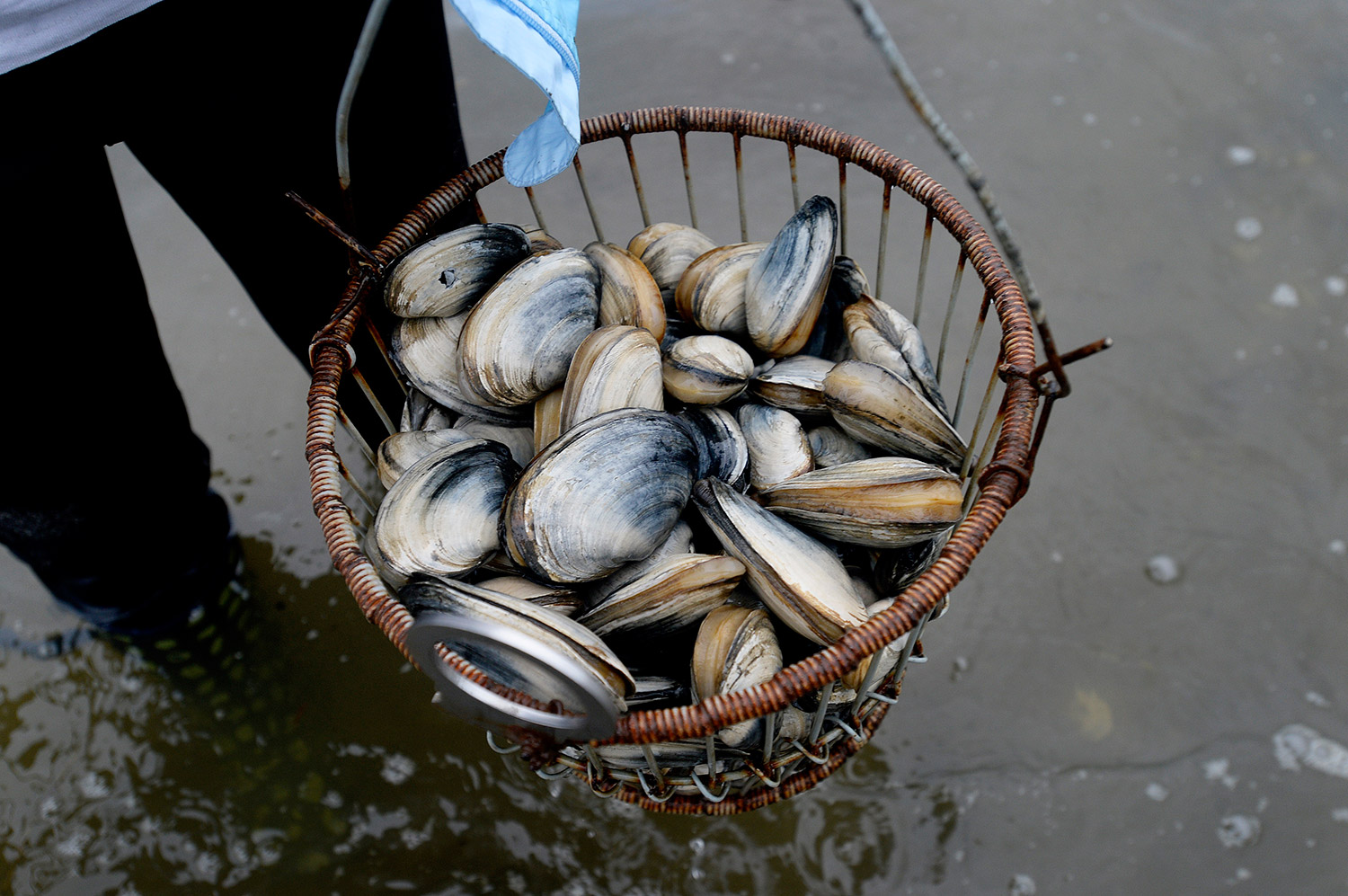 How to Tell if Clams Are Bad to Eat
