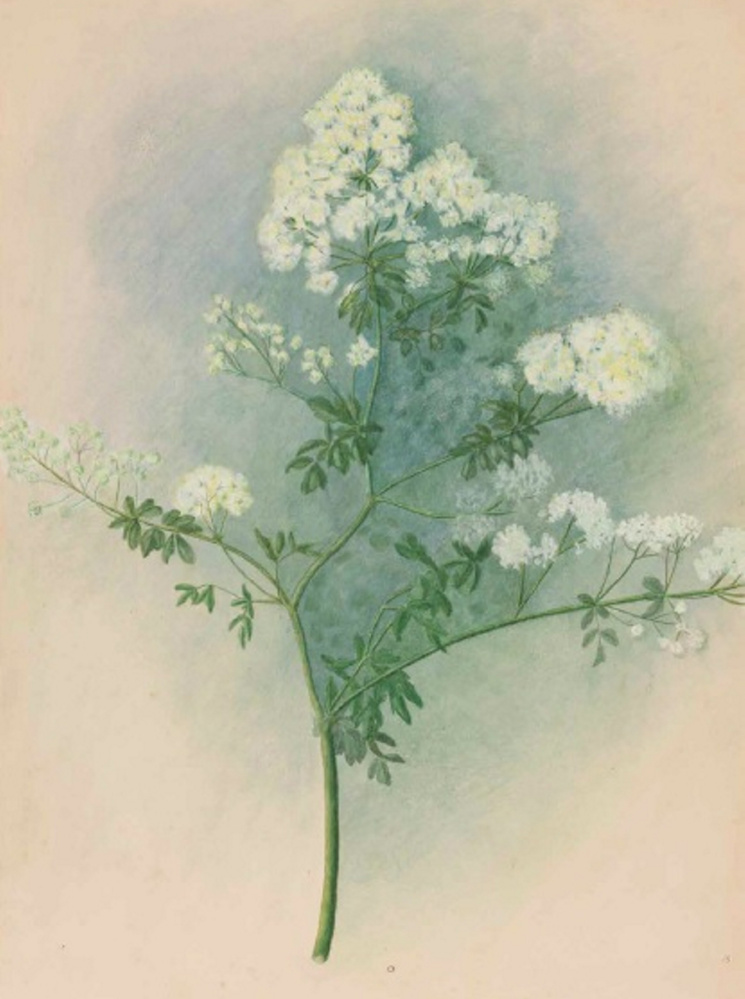 A 19th-century Brunswick botanist gets her due with book of flora
