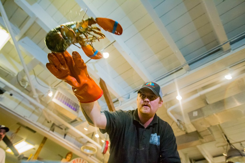 Dan Kraus, retail manager at Harbor Fish Market on Portland's waterfront, sorts lobsters in preparation for Labor Day weekend. Lobster prices have spiked as holiday demand has ramped up. Ben McCanna/Staff Photographer