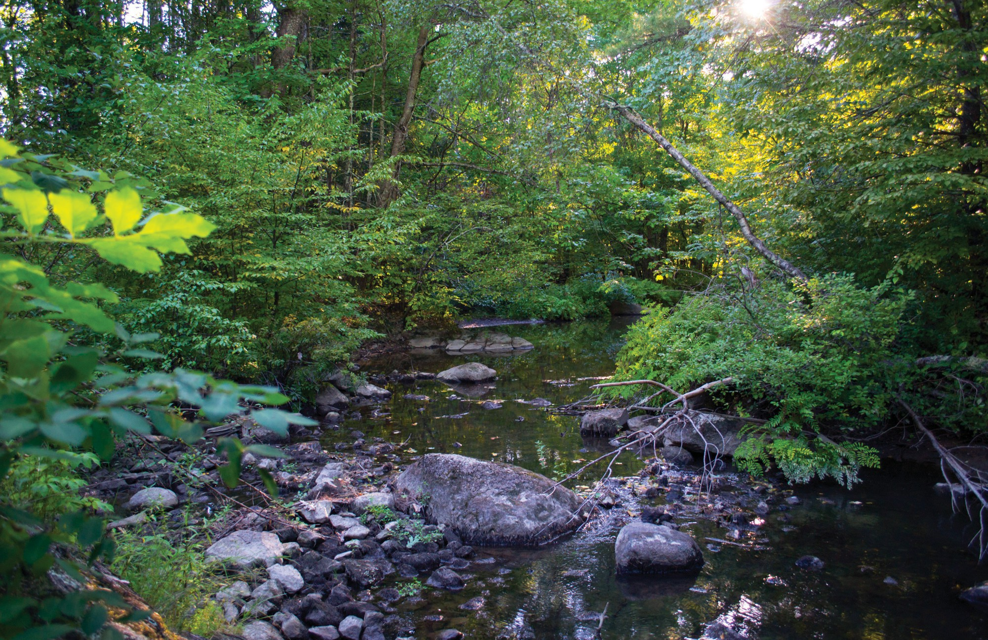 A portion of Thatcher Brook near I-95 in Biddeford is pictured on Sept. 14. The brook has been heavily polluted for years, and efforts to clean up the water are currently underway as the city awaits potential funding from the Maine Department of Environmental Protection.