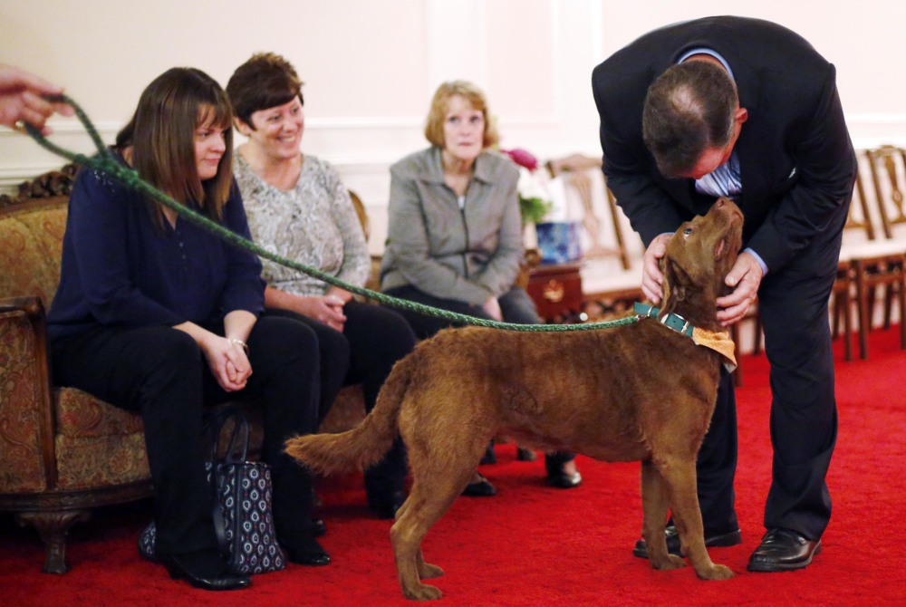 Therapy dog becomes best friend to bereaved - Portland