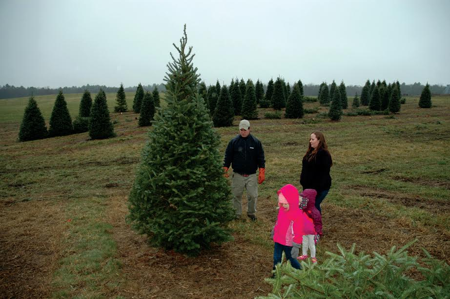 LIZ GOTTHELF/Journal TribuneChris and Sarah Drouin of Standish look at a tree at Boiling Spring Tree Farm in Dayton Tuesday. Standing nearby are their children, Emma and Bailey.
