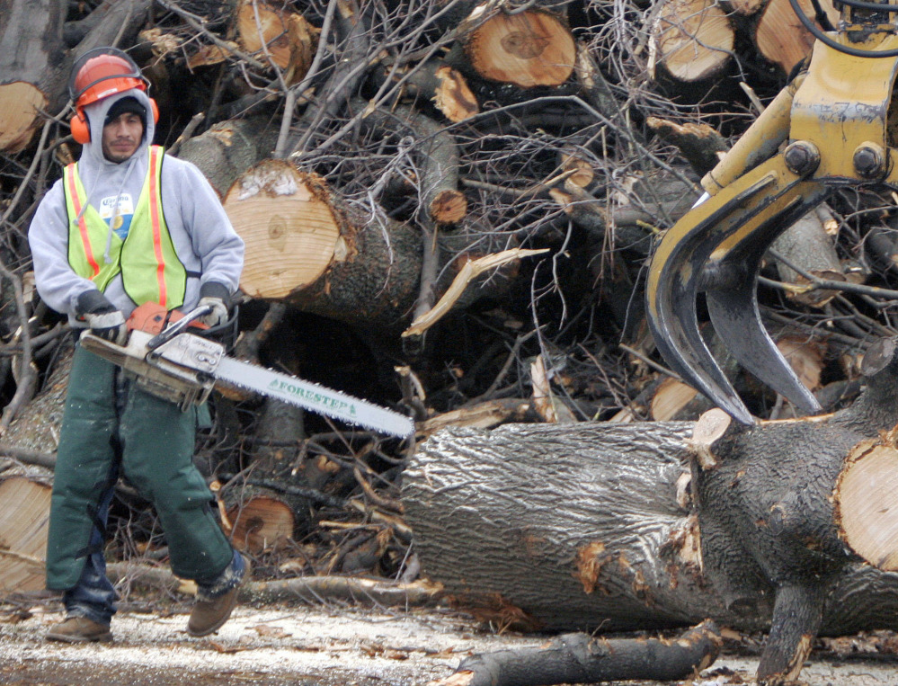 A tree removal worker with a chainsaw watches as a log is removed by an oversized claw in Worcester, Mass., after an 2008 infestation of the Asian longhorned beetle.