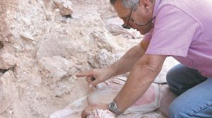 THE PHOTO provided by the Max Planck Institute for Evolutionary Anthropology shows Dr. Jean-Jacques Hublin on first seeing the new finds at the Jebel Irhoud site in Morocco where the oldest known fossils of human species have been unearthed. He is pointing to the crushed human skull (Irhoud 10) whose orbits are visible just beyond his finger tip.