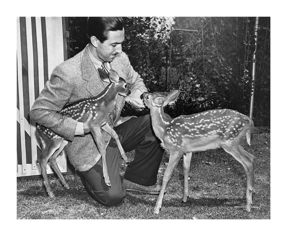 "Walt Disney with Bambi and Filene, orphan fawns from Maine that were models for the animated feature ""Bambi,"" released in 1942."