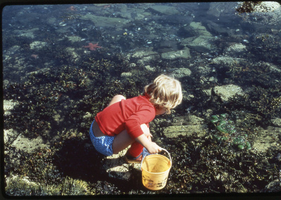 A daughter of the columnist's family friends explores the abundant marine life on the shore of Penobscot Bay in 1979.