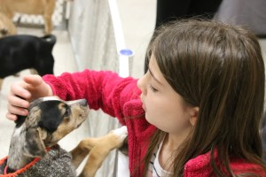 Johawnna Taylor, 10, of Standish pats a puppy at a pet adoption event in Biddeford Saturday, sponsored by the Animal Welfare Society and PetSmart. TAMMY WELLS/Journal Tribune