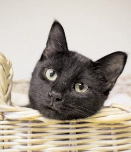 SAM is available for adoption from the Coastal Humane Society.