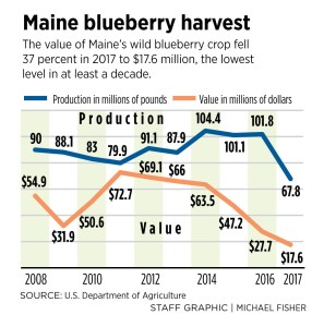 Price of Maine wild blueberries tumbles to lowest point in more than