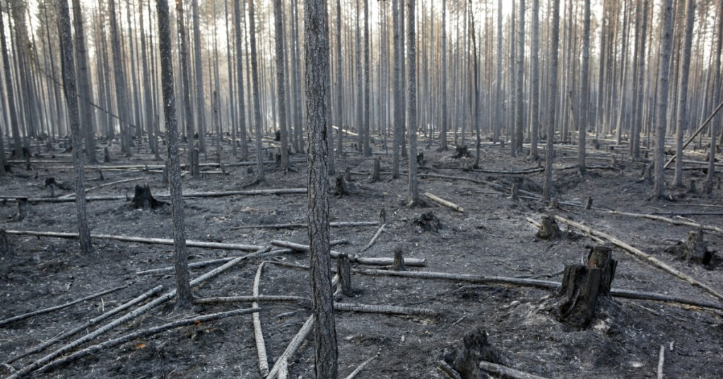 The burned trunks of trees are seen after a major forest fire in Angra, Ljusdal municipality, last Sunday. Sweden is fighting its most serious wildfires in decades.