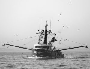 THE RUTH & PAT, a herring seine boat, motors out of the fog off the coast of South Portland. Fishermen and environmentalists are at odds over a suite of changes to American fishing laws. The House passed changes to the Magnuson-Stevens Act, a 42-year-old set of rules designed to protect American fisheries from overharvest. AP PHOTO / ROBERT F. BUKATY