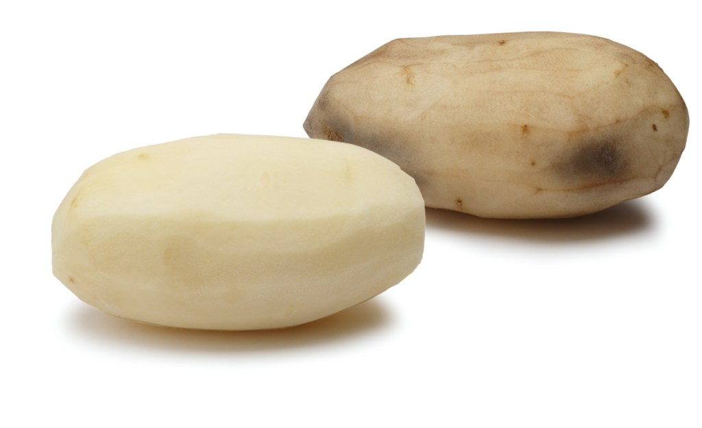 A gene-modified potato, foreground, and one without any modification.