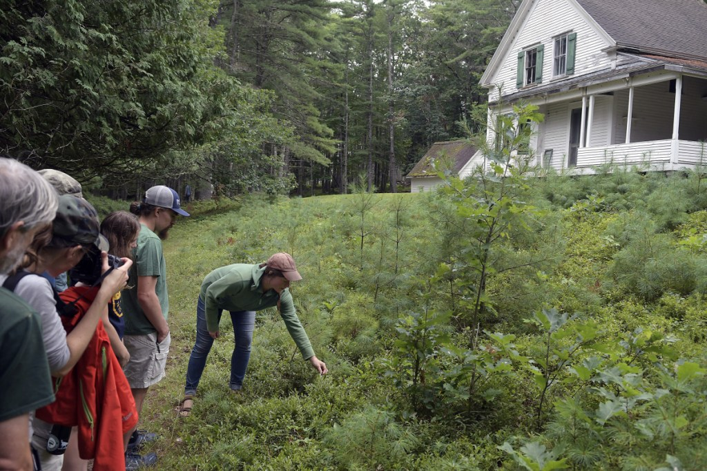Members of the New England chapter of Backcountry Hunters and Anglers learn to forage Sunday from Jenna Rozelle-Darcy, right, on Swan Island in the Kennebec River.