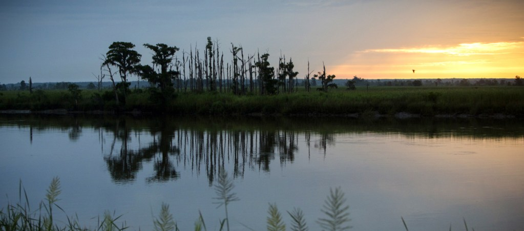 """Rising sea levels are killing trees along vast swaths of the North American coast by inundating them in salt water, creating """"ghost forests."""""""