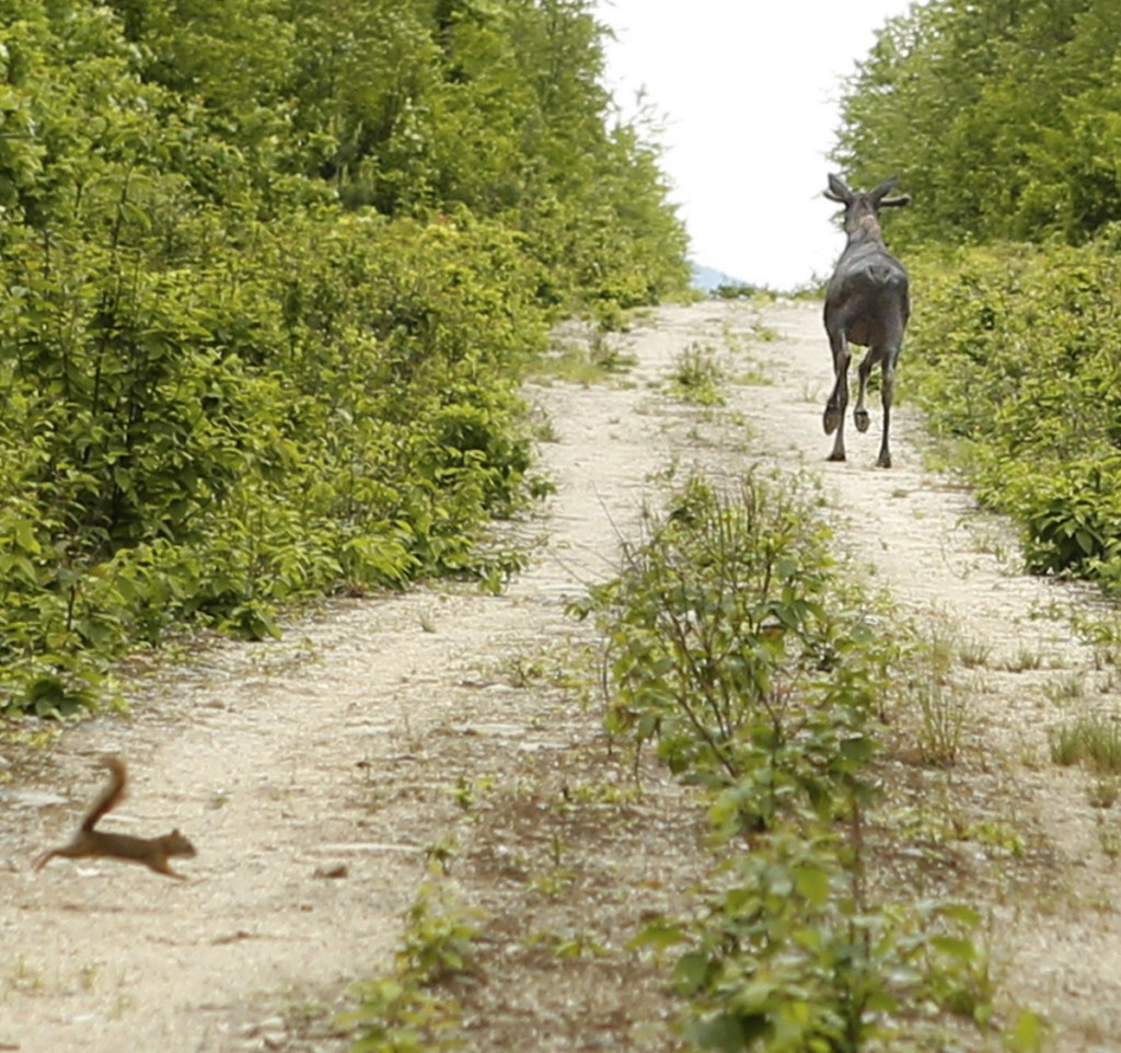 On roads where you are more likely to see a moose and squirrel in the road, you just might need to pull a rabbit out of your hat if you get a flat tire.