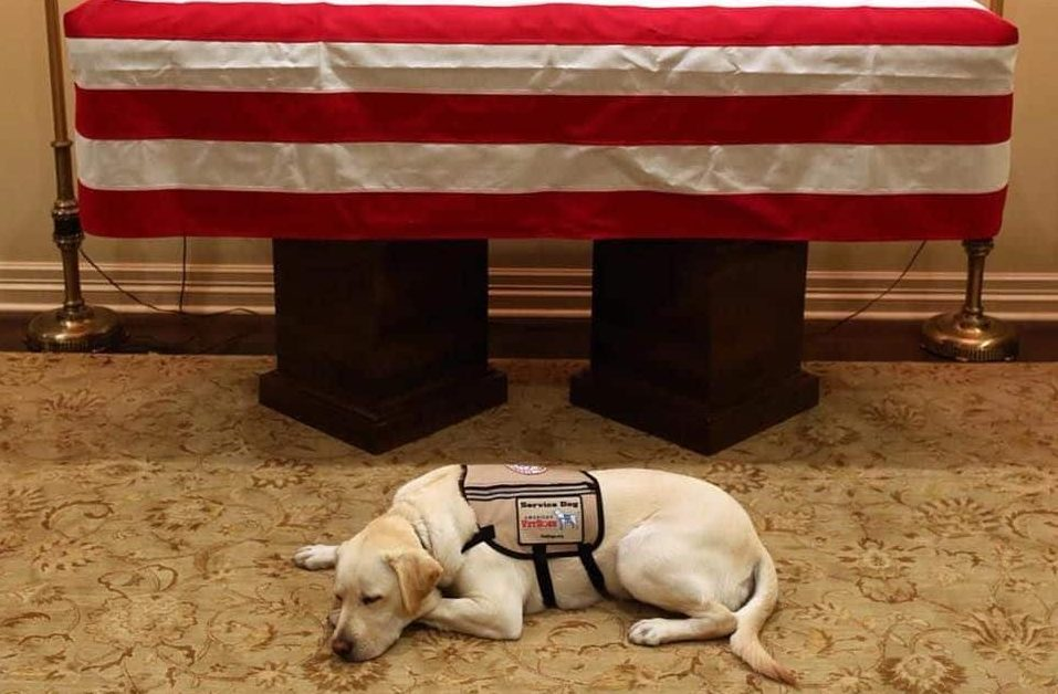 Sully, former Pres. George H.W. Bush's service dog, pays tribute in front of Bush's casket.