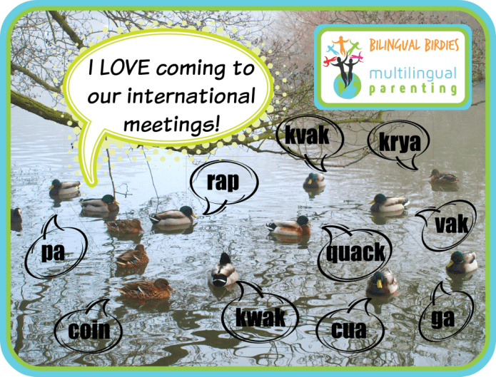 International duck meeting