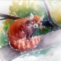 Red Panda spirit animal meaning