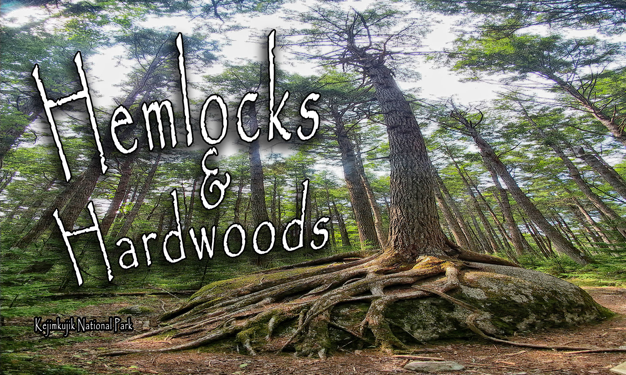 Hemlocks and Hardwoods Hiking Trail