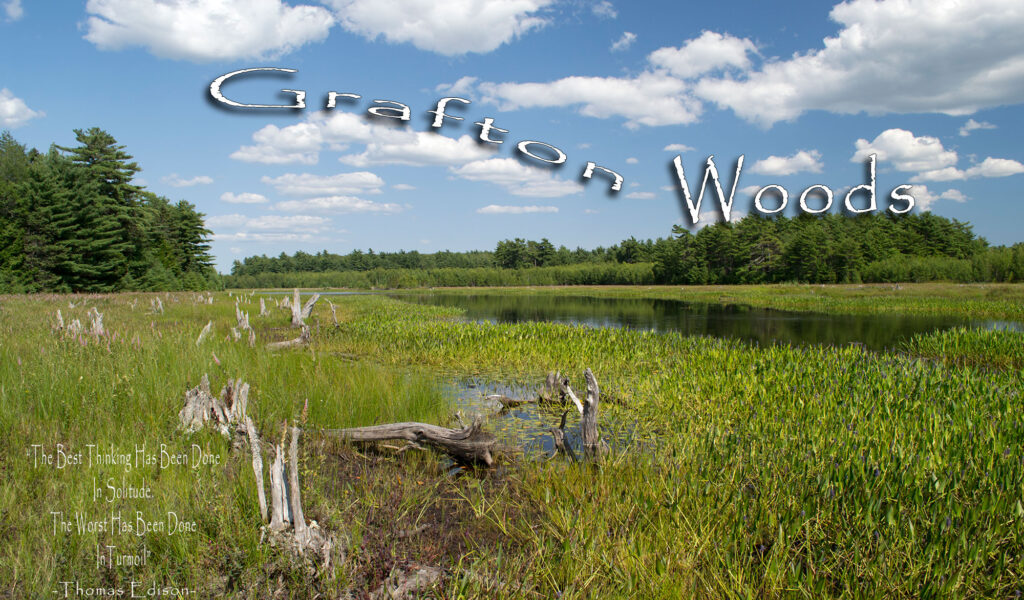 Grafton Woods Hiking Trail