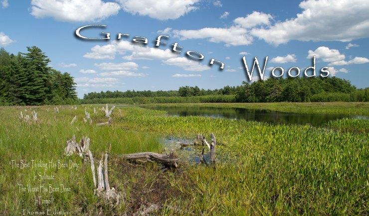 Grafton Woods Hiking Trail