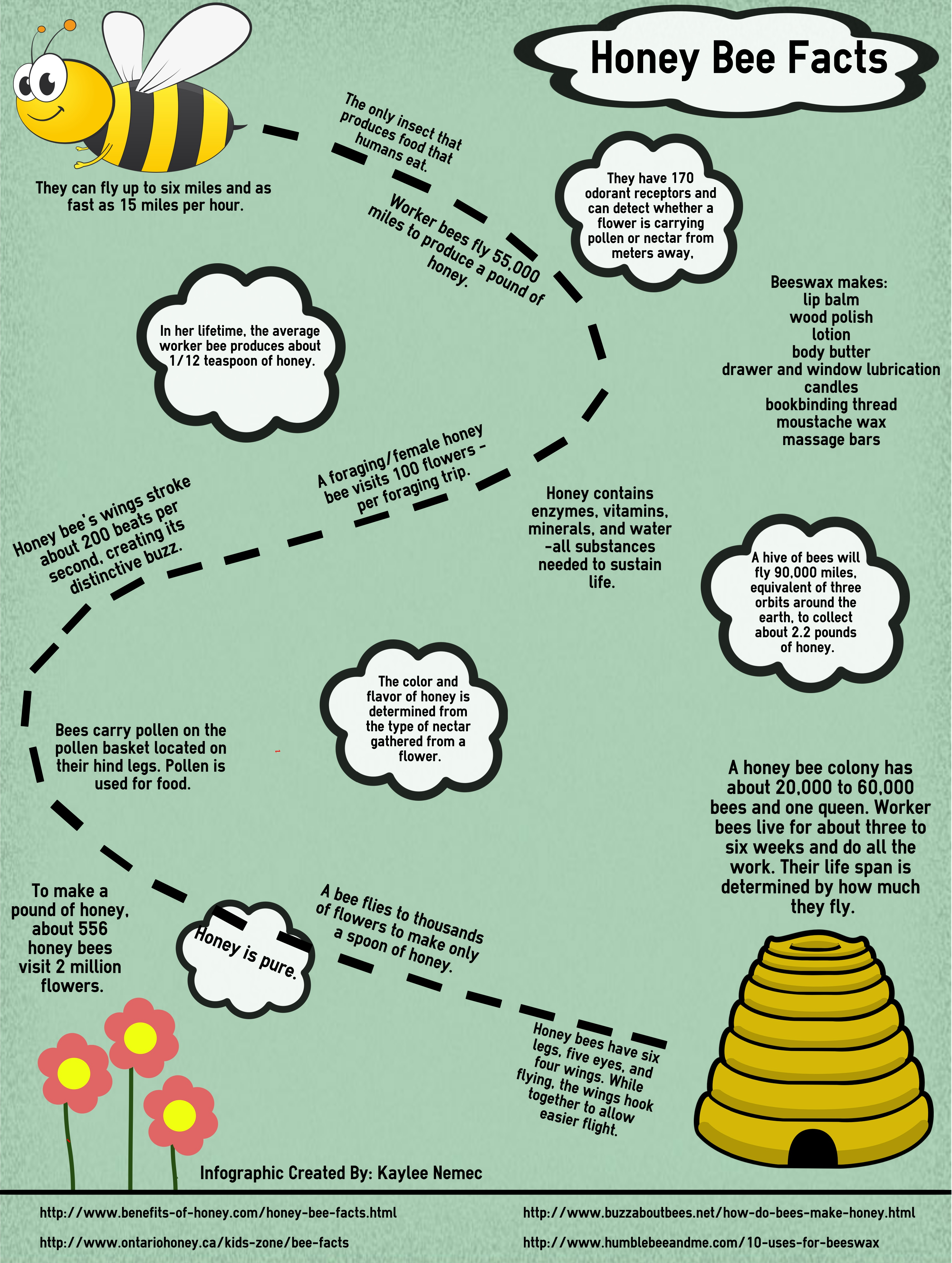 Bumble Bee Facts For Preschoolers