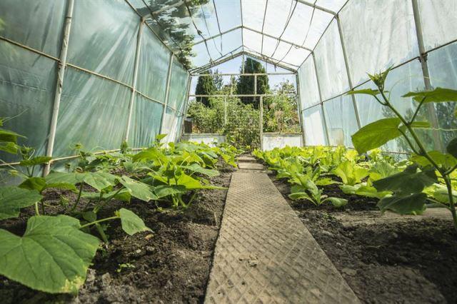 folie dla ogrodnictwa