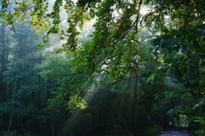 Moesgaard Forest