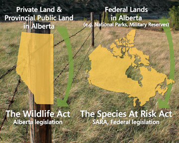 provincial-and-federal-diagram