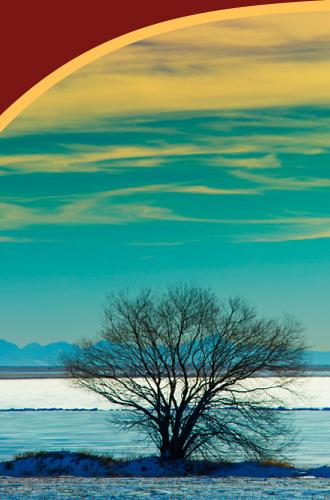 lone-tree