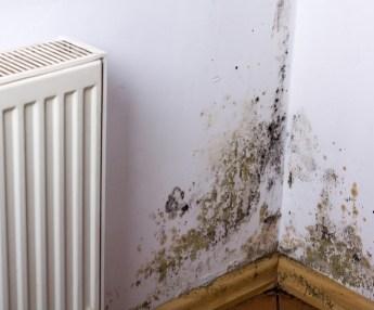 Damp on walls