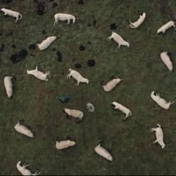 Dark Netflix episode 3 Past and Present dead sheep reupload