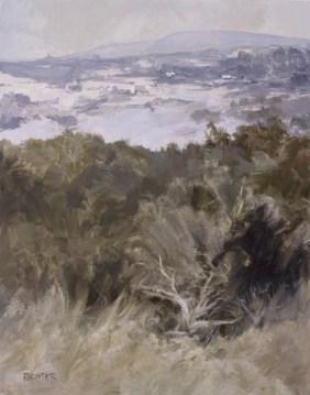 Cedar, Snow, Blue Hillside