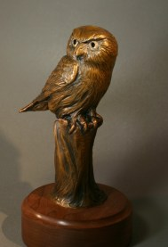Fearless Pygmy Owl