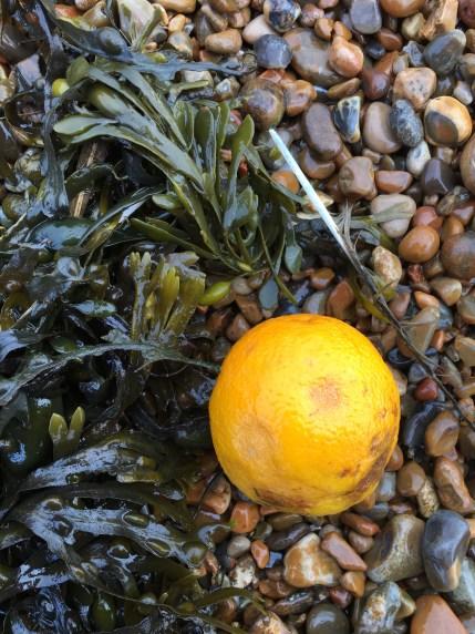 Hollesley Bay treasure