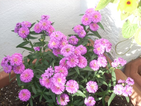 Neue Pflanze