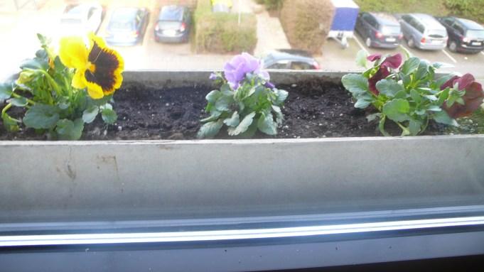 Blumen neu geparkt