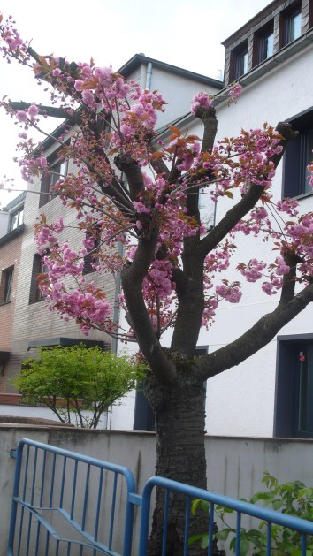 verkrüppelter blühender Baum