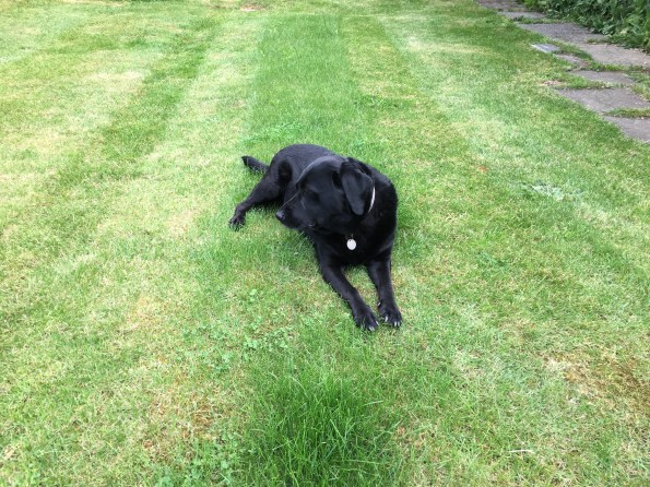 the joy of lawn mowing with Olive