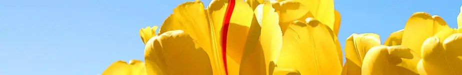 cropped-Tulips-1.jpg