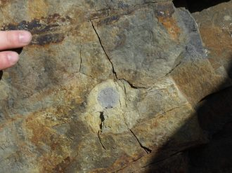This is a cross section of a burned tree that is more than 350 million years old!
