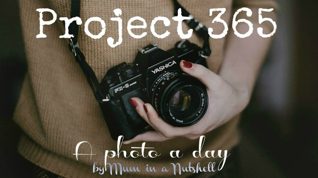 Project 365: A photo a day – Week 1