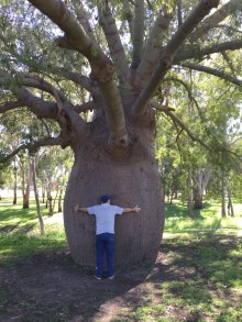 Takes at least 6 people to stretch out their arms to get around this tree!