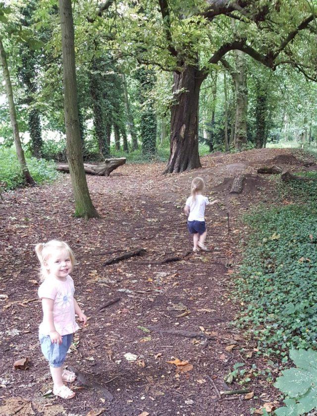 explore a wood