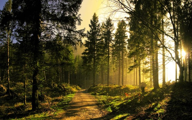 Nature Trail through a Welsh pine forest - photo from Great Escapes Wales