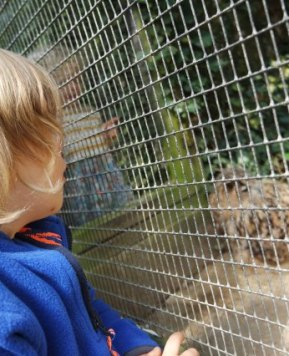 Somewhere new: Linton Zoo!